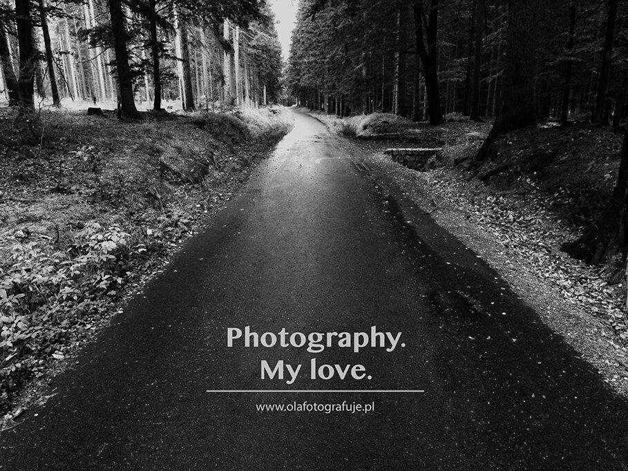 BLOG_las. fotografia moja miłość